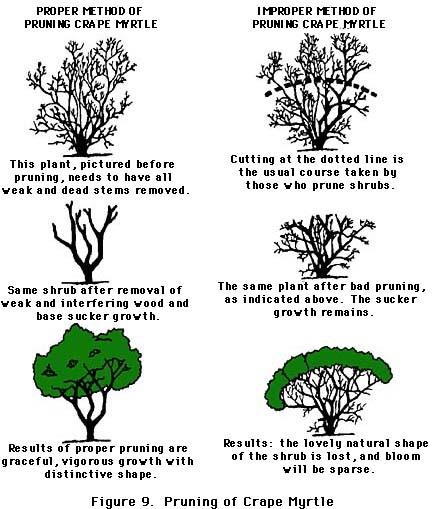 Pruning Amp Maintaining Shrubs And Trees Todaysmower Com